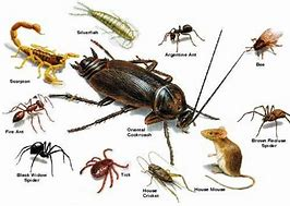 Pest Control Services, Exterminator Ossining NY offers a variety of pest control services for maximum pest control management in your home or office. Our services include termite control, bed bug prevention and much more